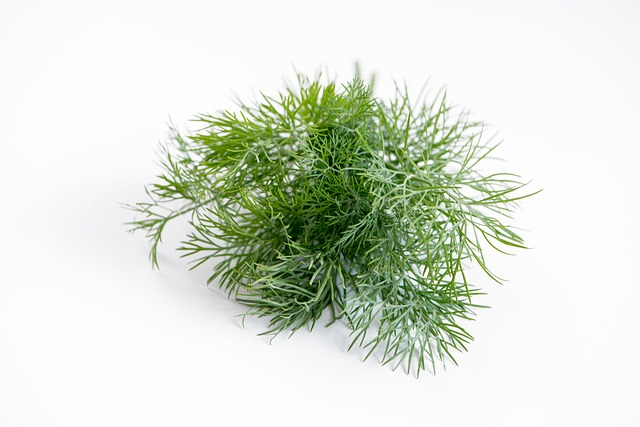 Dill Seed Herbal Water - 50mls