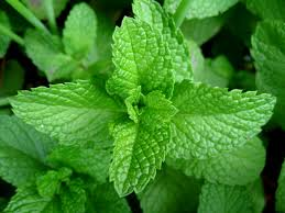 Spearmint Flavoured Oil - 10mls